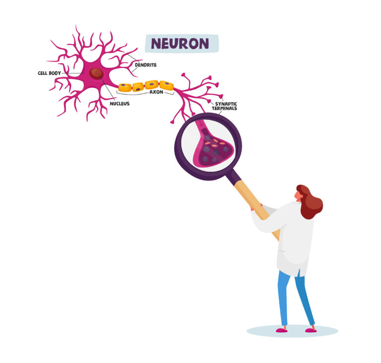 Tiny Scientist Female Character Wearing White Medical Robe Learning Human Neurons Scheme with Dendrite, Cell Body, Axon and Nucleus with Synaptic Terminals in Laboratory. Cartoon Vector Illustration